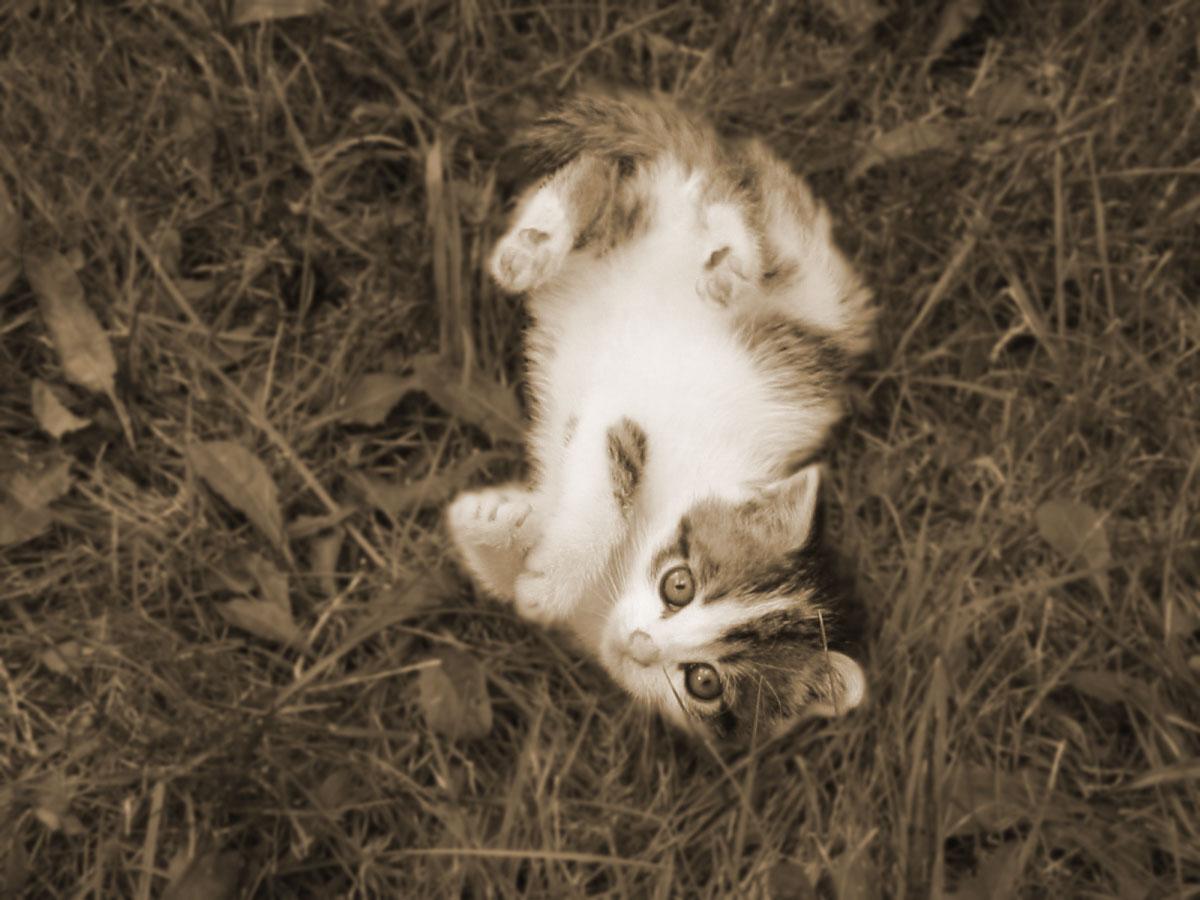 sepia-kitten